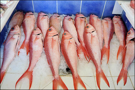 Leeward Islands, Sint Maarten - Red snapper on the market in Marigot