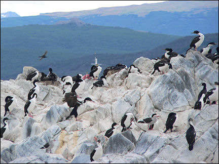 Argentina - Ushuaia, sea birds in the Beagle Channel