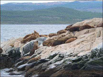 Argentina - Ushuaia, seals in the Beagle Channel