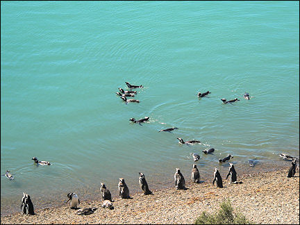Argentina - Penguin colony at Puerto Madryn on the Atlantic coast