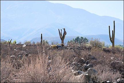 Argentina - Bare, with grit and cactuses on the way to Abra del Infiernillo