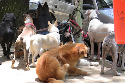 Argentina - Dog walking service in Buenos Aires