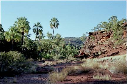 Australia, Northern Territory - Palm Valley
