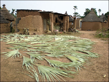 Burkina Faso - Palm leaves for weaving