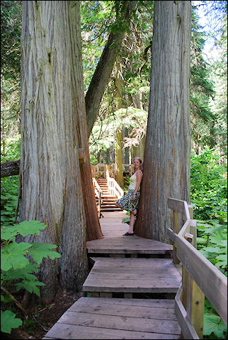 Canada, British Colombia and Alberta - Red Cedar Trail in Mount Revelstoke National Park