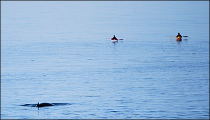 Canada, Quebec - kayakers with whale