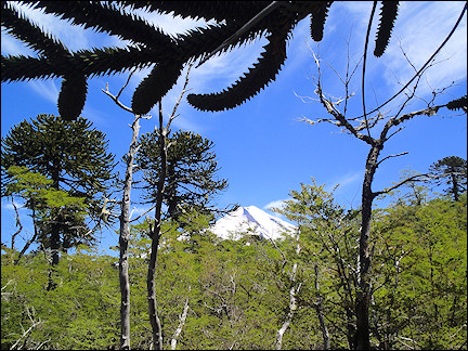 Chile - View of the Llaima volcano
