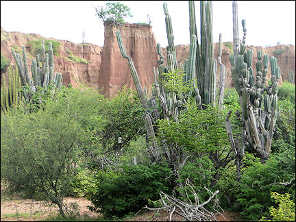 Colombia, Tatacoa - Fantastic rock formations and meters high cactuses