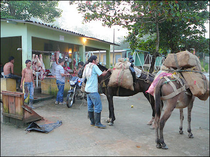 Colombia, Cuidad Perdida - Horses are loaded up with provisions for the trek