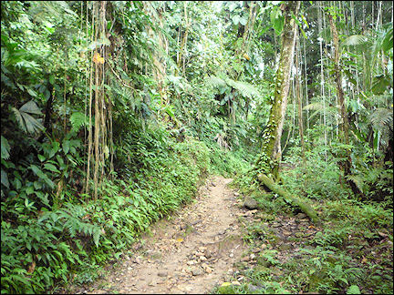 Colombia, Cuidad Perdida - Walking amidst tropical green