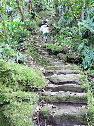 Colombia, Cuidad Perdida - Steep stone steps to the lost city