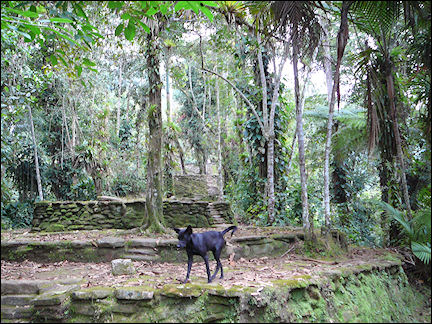 Colombia, Cuidad Perdida - Terrace in the Lost City