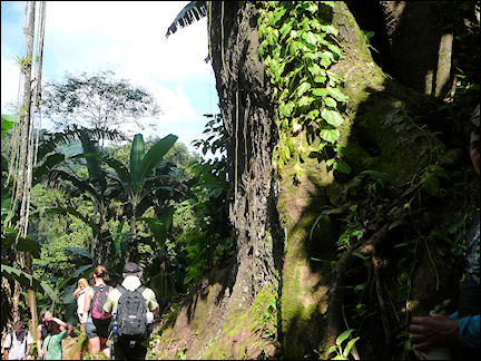 Colombia, Cuidad Perdida - Walking in tropical green surroundings