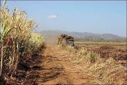 Costa Rica - Sugar cane harvest