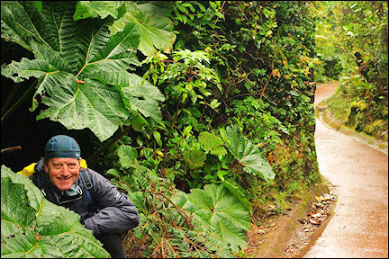 Costa Rica - The writer in Houseplant Country