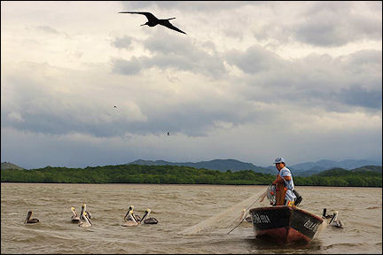 Costa Rica - Fisherman in Gulf of Nicoya surrounded by frigatebirds and pelicans