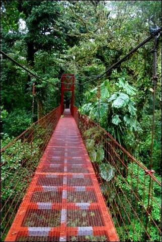 Costa Rica - Suspension bridge in Monte Verde