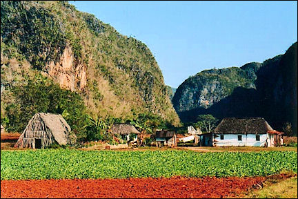 Cuba - Viñales, house with tobacco shed