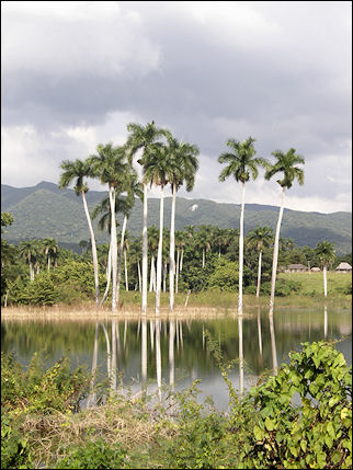 Cuba - Trees in the water, on the way to San Diego de Los Banos