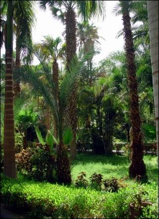 Egypt - Botanical garden on Kitchener's island