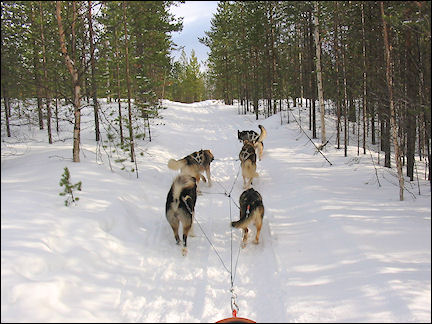 Finland, Lapland - Huskies make a run for it