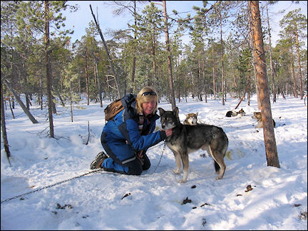 Finland, Lapland - The writer with the leader of the pack (of dogs