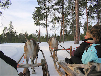 Finland, Lapland - Tour in reindeer sled