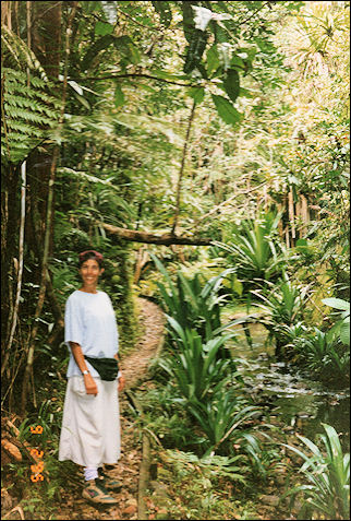 Fiji - Linda and the dense vegetation of Colo-i-Suva Forest Park
