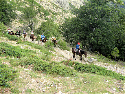 France, Corsica - A caravan of horses, mules and dogs