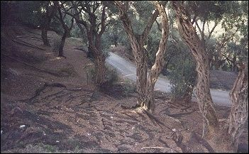 Greece, Corfu - Fairy-like olive grove near Armenades