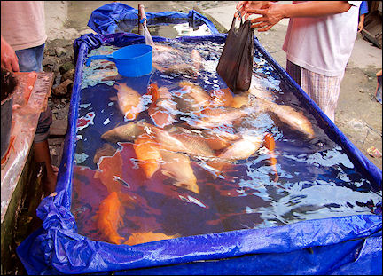 Indonesia, Sumatra - Fresh fish on Pasar Atas in Bukittinggi
