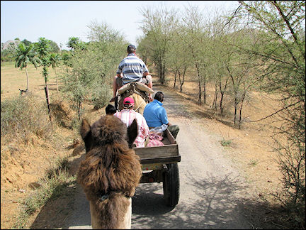 India, Jaipur - Camel ride