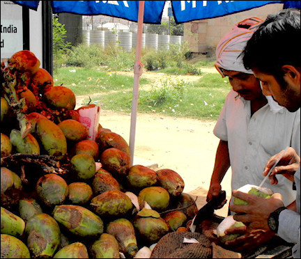 India, Delhi - A street vendor selling green coconuts