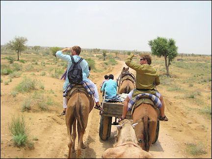 India - Bikaner, camel trip in the desert
