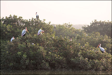 India, Tamil Nadu - Vedanthangal Bird Sanctuary