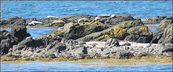 Iceland - Vatnsnes, seals at Stapar