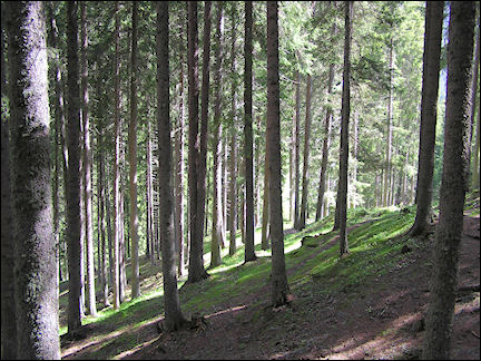 Italy, Dolomites - Woodland management in the Dolomites