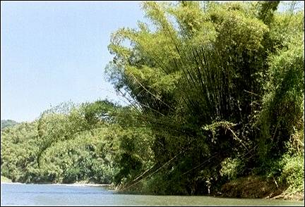 Jamaica - Bamboo rafting on the Rio Grande