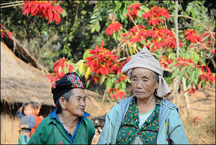 Laos - Local population in front of a huge poinsettia tree