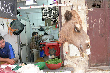 Morocco - Fès, camel head at the butcher store in the medina