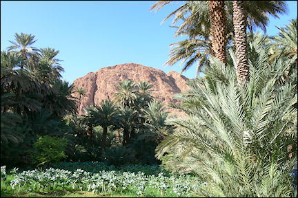 Morocco - Oasis in the Draa valley