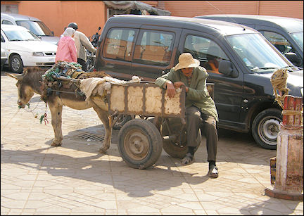 Morocco, Marrakech - Sleeping man with donkey cart