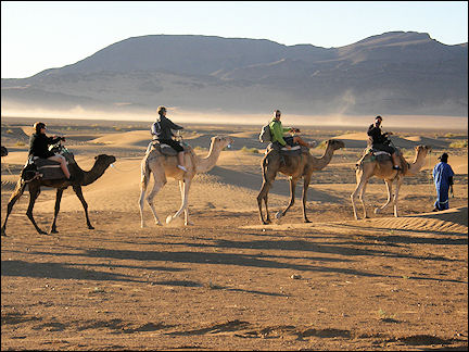 Morocco - Dromedaries against a backdrop of white shards of morning haze