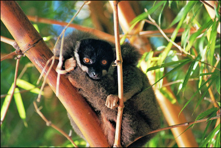 Madagascar - In the lemur park