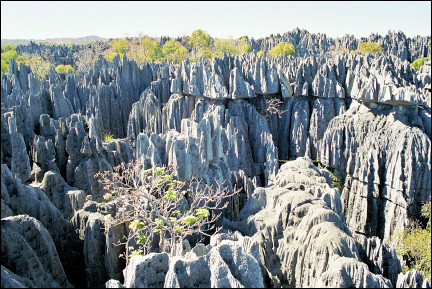 Madagascar - Tsingy, knife-sharp limestone rocks
