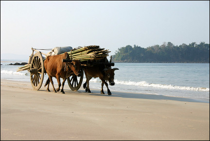 Myanmar, Ngwe Saung - Beach with ox-cart