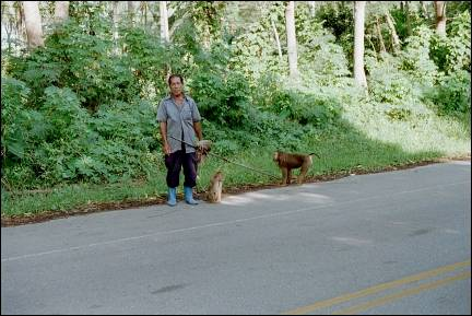 Malaysia - Man with monkeys which pick coconuts for him