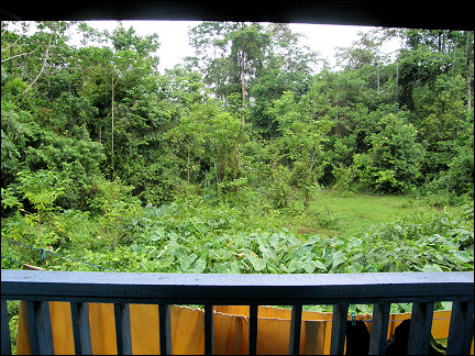 Malaysia, Borneo, Sabah - view from the porch in Poring