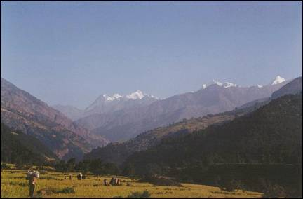 Nepal, Ganesh Himal Trek - Paddies with a view of snowy mountain peaks