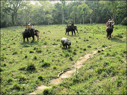 Nepal - Chitwan National Park, meeting a rhino during elephant ride